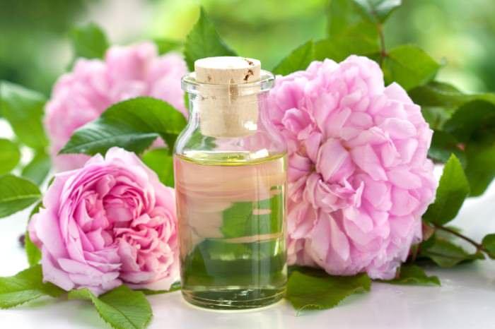 Цветки шиповника являются прекрасным сырьем для получения розового масла