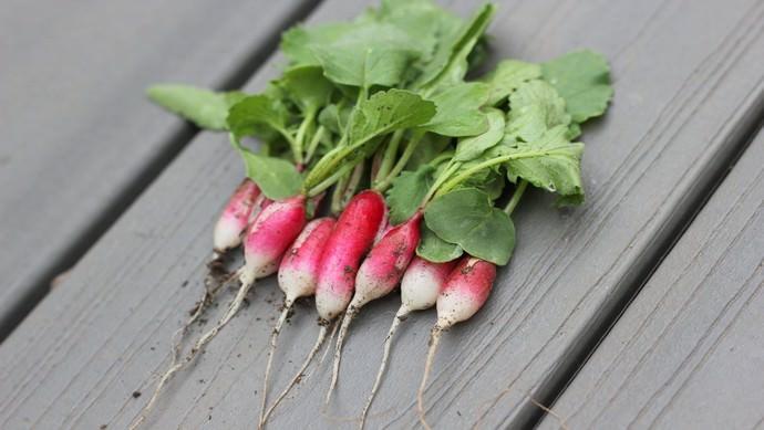 Молодая свежая ботва редиса, вне зависимости от сорта, в некоторых случаях бывает даже более полезна, чем корнеплоды этой популярной огородной культуры