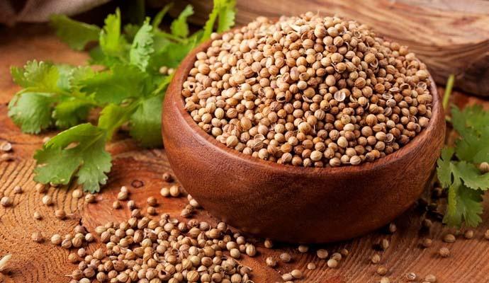 С лечебными целями используется не только свежая зелень кориандра, но и семена