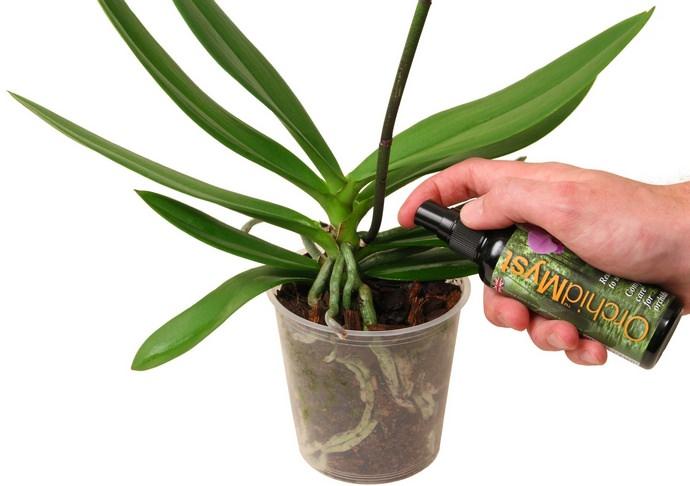 Для орхидеи очень важен состав подкормок, чтобы максимально приблизить условия ее произрастания к естественным