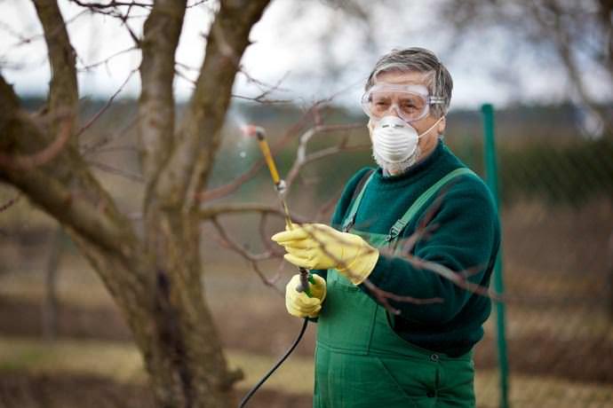 Можно ли опрыскивать плодовые деревья