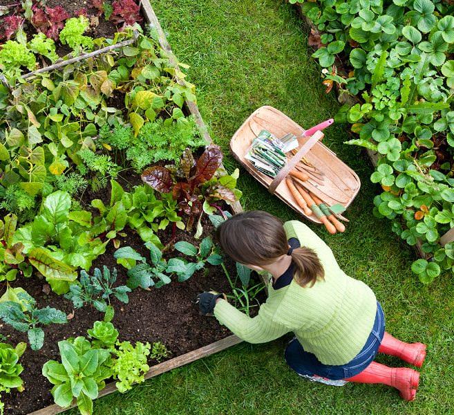 Уплотненные посадки овощей, плодовых, схемы, плюсы, смешанные