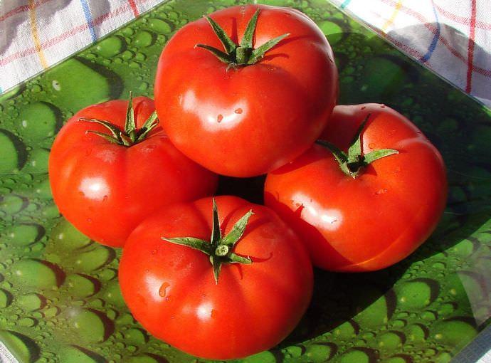 Отмечается раннее и дружное вызревание урожая томатов Ямал