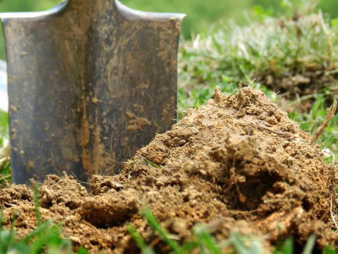 При подготовке почвы на участке к посадке картофеля чаще всего используются органические удобрения, представленные конским или коровьим навозом