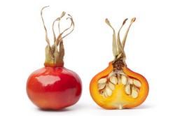 Шиповник обладает уникальным витаминным и минеральным составом