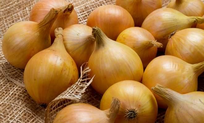 Штутгартер Ризен – раннеспелый, высокоурожайный и очень перспективный для приусадебного овощеводства сорт