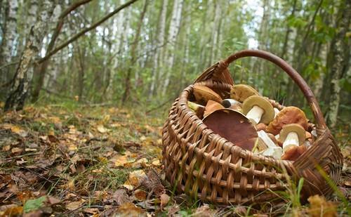 Первые весенние грибы появляются на европейской территории ещё в марте