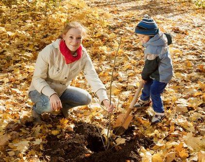 Осенняя посадка деревьев и кустарников практикуется садоводами во многих странах