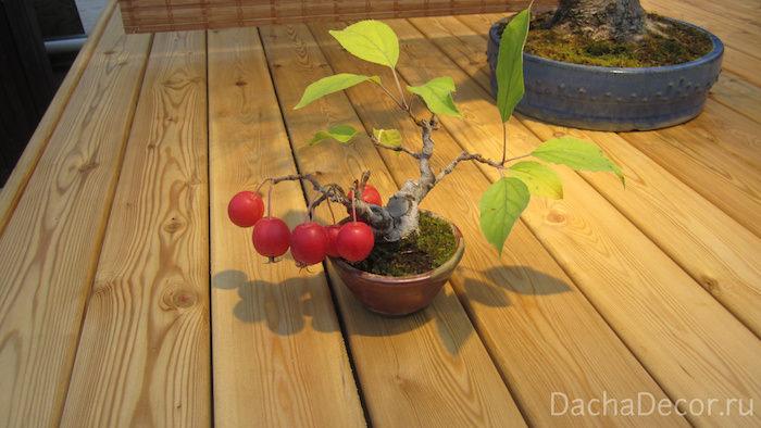 Яблоня домашняя, возраст — 12 лет ©DachaDecor.ru