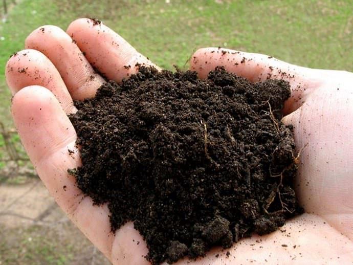 При наличии почвы с щелочными показателями потребуется внесение торфяной крошки