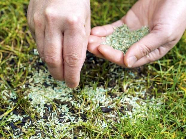 Высевать семена травяных смесей нужно, придерживаясь стандартных норм расхода, которые всегда обозначаются производителями на упаковке с семенным материалом