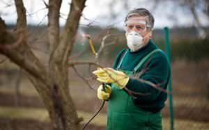 Опрыскивание персика ранней весной является очень важным мероприятием