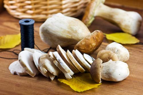Лучше всего переработку грибов производить непосредственно после сбора