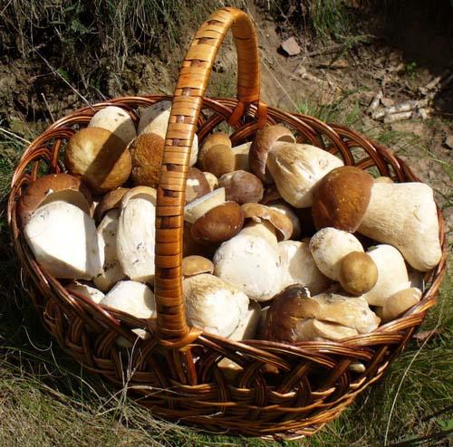 Существуют разные способы, позволяющие сохранить грибы свежими