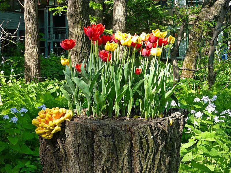 Декорирование пней живыми растениями — отличный способ гармонично оформить сад на даче