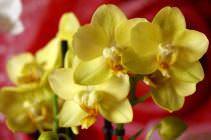 В цветы из семейства орхидных просто невозможно не влюбиться