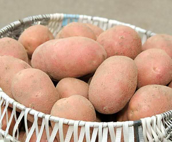 Картофель «Альвара» вполне оправданно является одним из лучших сортов европейской селекции среди краснокожурных сортов