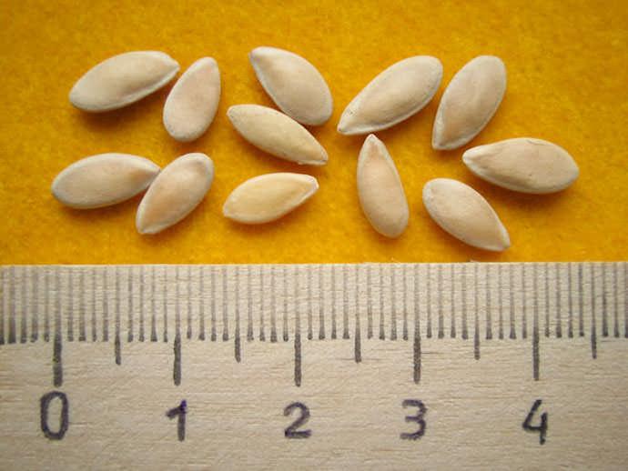 Семена для посева рассады выбирать нужно крупные и необходимо их обработать составом для таких семян (можно купить в магазине)