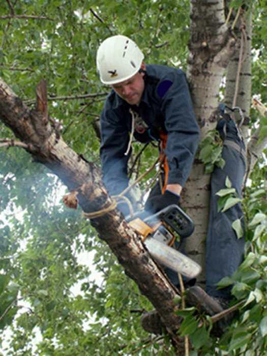 Обязательная подготовка ствола дерева перед началом сооружения домика