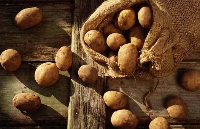 Лежкость картофеля «Накра» при хранении — от средних до хороших показателей, достигает 95 %