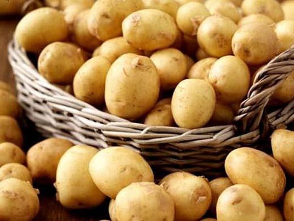 При соблюдении агротехники удается в ранние сроки получить рассыпчатый и вкусный молодой картофель