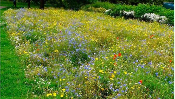 Луговой газон предполагает, чтобы результат выглядел как настоящая поляна