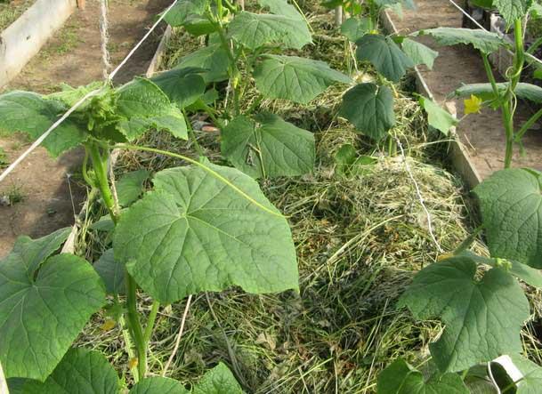 Теплая грядка позволяет выращивать полезные и вкусные зеленцы, начиная с ранней весны