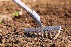 Правильно подготовленная почва является основополагающим фактором успеха при выращивании картофеля
