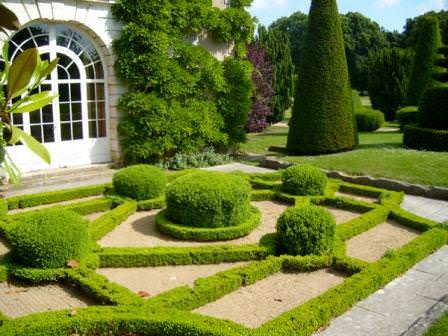 На открытом грунте в европейских садах произрастают обычно стройные кипарисы и хвойные пинии