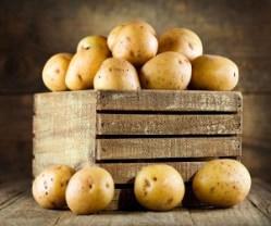 Картофель «Лига» пользуется спросом у огородников