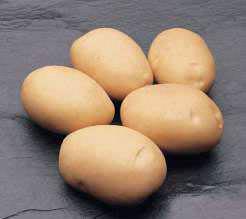 Картофель «Латона» относится к очень популярным сортам