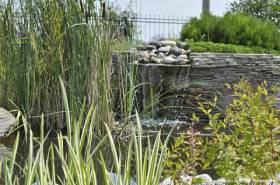 Растения для водоема виды и уход!