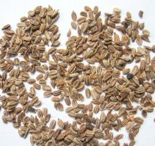 Легкий способ посева мелких семян