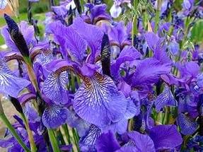 Создаем цветник из первоцветов и многолетников