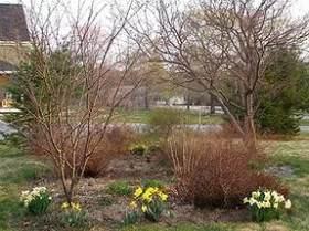 Весенние работы в саду - МАРТ