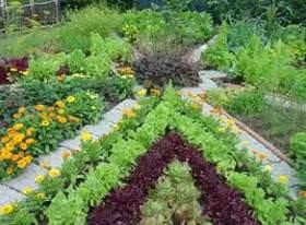 Уплотненные посевы - это удобно и выгодно