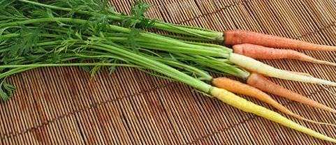 Какой сорт моркови посадить в Крыму