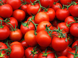Какие сорта помидоров достаточно устойчивые