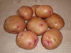 Картофель «Снегирь» относится к числу наиболее популярных сортов