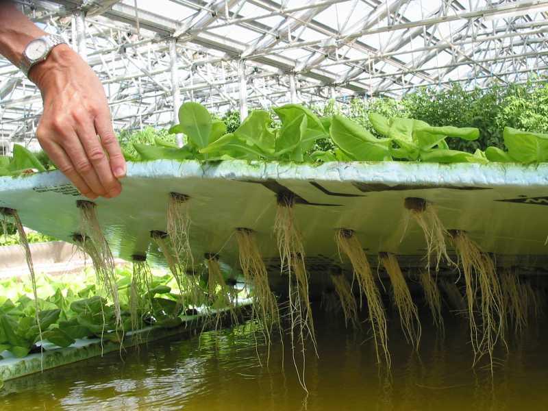 Под аэропоникой понимают агротехнику выращивания растений без почвенного субстрата