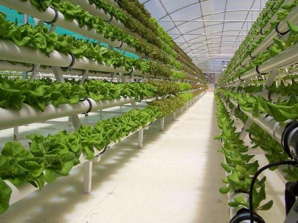 Подача раствора на корни производится в виде микрокапель или аэрозоля (тумана) в зависимости от распыляющего устройства