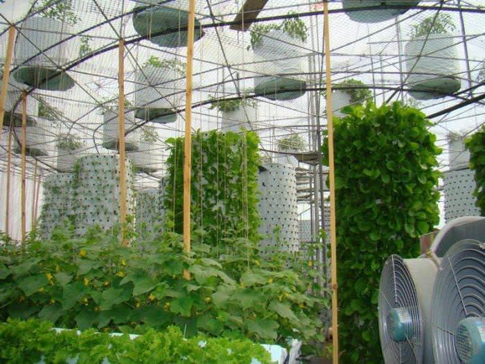 Для выращивания растений указанным способом используется современное оборудование