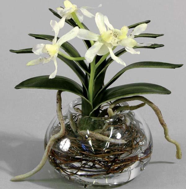 Орхидея может жить без грунта