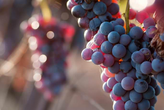 Во время беременности и кормления грудью виноград предпочтительнее выбирать местных сортов, не импортный