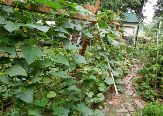 Вертикальные грядки для огурцов – отличный способ сэкономить место на небольшом участке