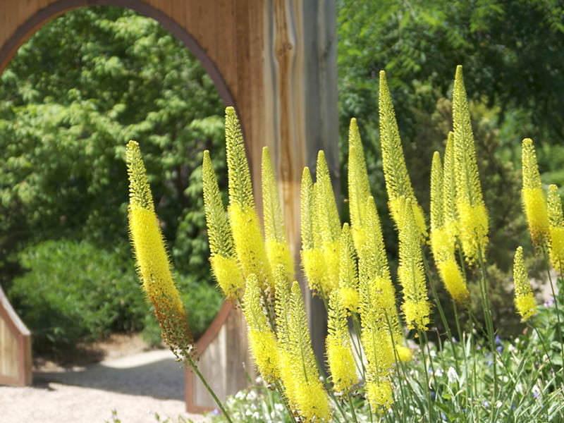 Для растений следует приготовить высокие и хорошо дренированные гряды