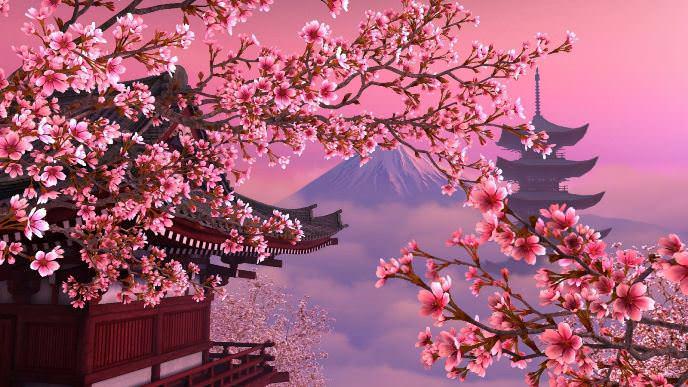 В конце марта – начале апреля каждый год японцы празднуют цветение сакуры