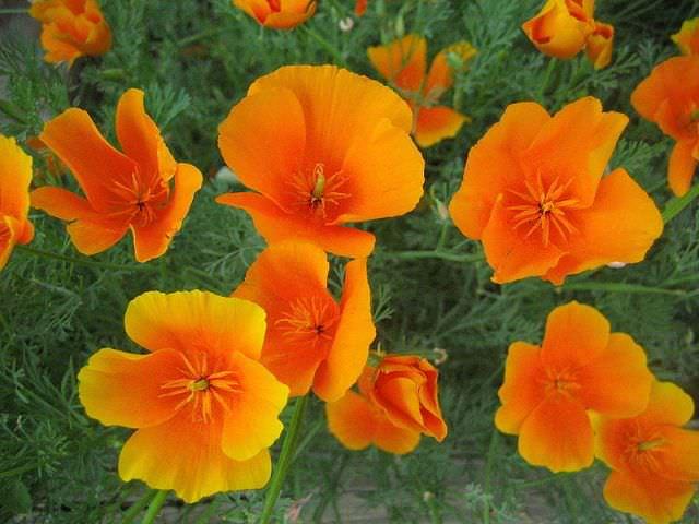 Созерцать красоту цветения растения лучше в солнечную погоду