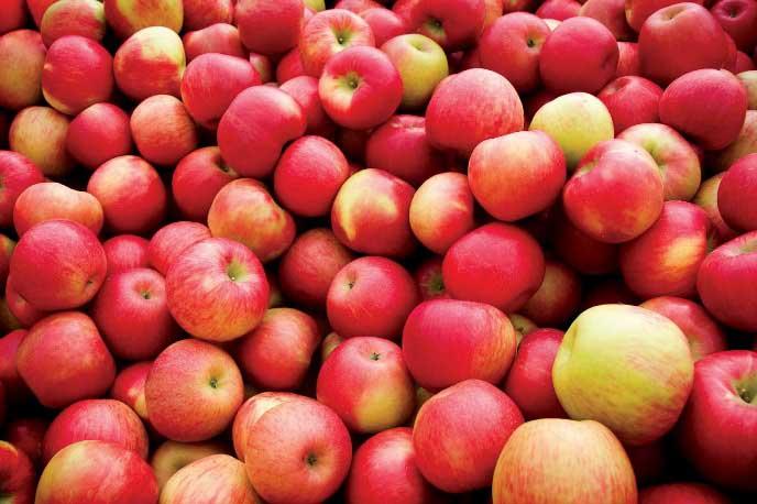 Перед закладкой на зиму яблоки можно протереть мягкой тряпочкой, смоченной в слабом растворе глицерина либо салициловой кислоты