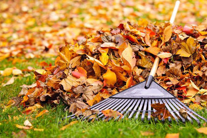 Благоприятные работы для ноября — укрытие сухими листьями и компостом пряных трав